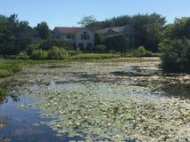 Lirio, lago y casa de agua foto de archivo