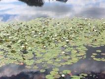 Lirio, lago y casa de agua imagen de archivo libre de regalías