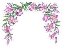 Lirio rosado delicado Gráfico de lápiz Foto de archivo libre de regalías