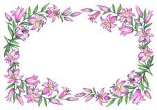 Lirio rosado delicado Gráfico de lápiz stock de ilustración