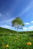 Lirio y árbol de día Fotos de archivo libres de regalías