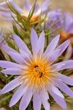 Lirio y abejas de agua Fotos de archivo