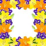 Lirio y azul amarillos, anaranjados Iris Flower Border en el fondo blanco Ilustración del vector Fotografía de archivo