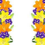 Lirio y azul amarillos, anaranjados Iris Flower Border en el fondo blanco Ilustración del vector Foto de archivo libre de regalías