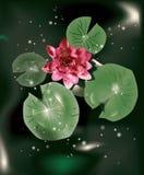 Lirio y hojas de agua Imagenes de archivo