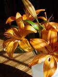 Lirios anaranjados Imagen de archivo libre de regalías