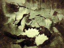 Lirios de agua Imagen de archivo libre de regalías