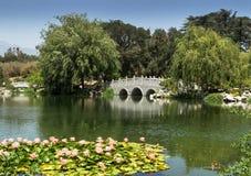 Lirios de agua en el jardín chino fotografía de archivo libre de regalías