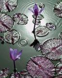 Lirios de agua tropicales púrpuras con las gotitas de agua foto de archivo