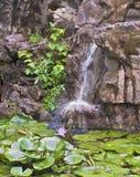 Lirios de agua y cascada Foto de archivo libre de regalías