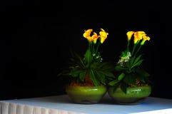 Lirios de cala en floreros imagen de archivo libre de regalías