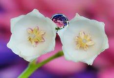 Lirios del valle en el fondo de un jardín floreciente Fotos de archivo libres de regalías