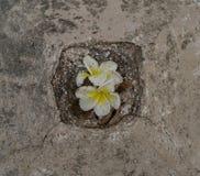 Lirios en piedra Fotografía de archivo