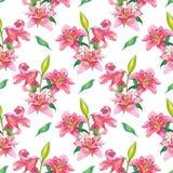 Lirios rosados Modelo inconsútil de la acuarela Imagen de archivo libre de regalías