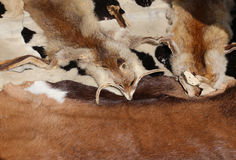 lisów futerka z jego przewodzą na sprzedaży w handcrafted rzemiennych towarach Obrazy Stock