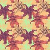 lis Image stock