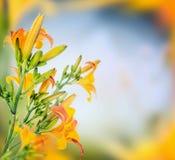 Lis au-dessus de fond brouillé de nature, frontière florale Images libres de droits