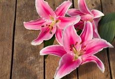 Lis coloré de fleur Image libre de droits
