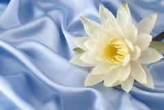Lis d'eau sur le satin bleu Images libres de droits