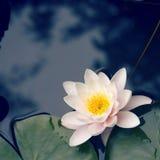 lis de fleur Photographie stock