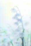 Lis de la vallée en brouillard image libre de droits