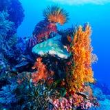 Lis de mer sur le récif tropical coloré image libre de droits
