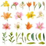 Lis de vintage et Rose Flowers Set - style d'aquarelle Images libres de droits