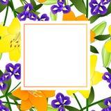 Lis et bleu jaunes et oranges Iris Flower Banner Card Border sur le fond blanc Illustration de vecteur illustration stock