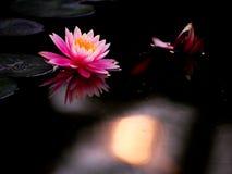 Lis et coucher du soleil d'étang Image libre de droits