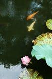 Lis et poissons d'eau Photo libre de droits