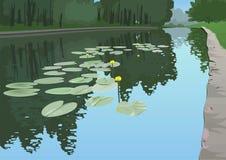 Lis jaunes dans un étang. Image stock