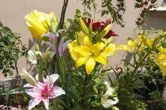 Lis jaunes et roses sur un lit Photo stock