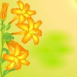 Lis orange Image stock