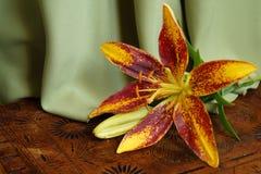 Lis orange, Lilium Pensylvanicum Image libre de droits