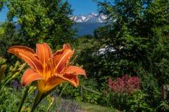 Lis. Park regional de chartreuse en isere royalty free stock images