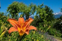 Lis. Park regional de chartreuse en isere stock photography