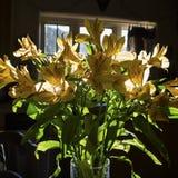 Lis plus faciles jaunes 021 de journée de printemps photographie stock
