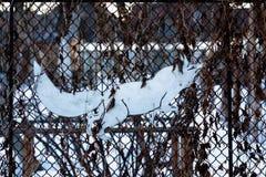 Lis robią żelazny i malujący biel dołączający metalu grill obraz royalty free