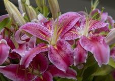 Lis rose de vue de plan rapproché le beau fleurit à Seattle, Washington photos stock