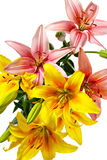 Lis roses et jaune-orange Images stock
