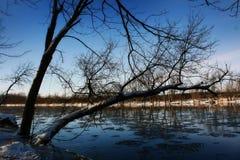 lis rzeka Obrazy Stock