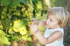 Lisa en druiven Stock Afbeelding