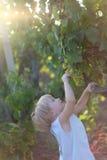 Lisa en druiven royalty-vrije stock fotografie