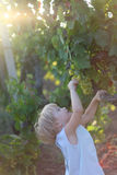 Lisa and grapes. Baby girl reach green grapes Royalty Free Stock Photography