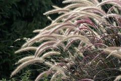lisa wielo- kolorowego reszka Fotografia Stock