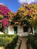 Lisboa, Portugal - 21 Nowember 2016: Árbol floreciente rosado, lindo fotos de archivo