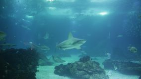 Lisbon aquarium sharks stock footage