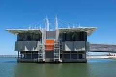 Lisbon Oceanarium Zdjęcie Stock