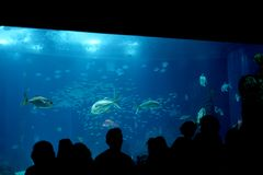 Lisbon oceanarium Royalty Free Stock Photos