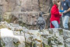 Lisbon Oceanarium, birds Royalty Free Stock Images